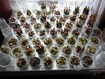 Полностью загруженный кильчеватор (около 700 чубуков). - Альбом Шашков: Выращивание саженцев