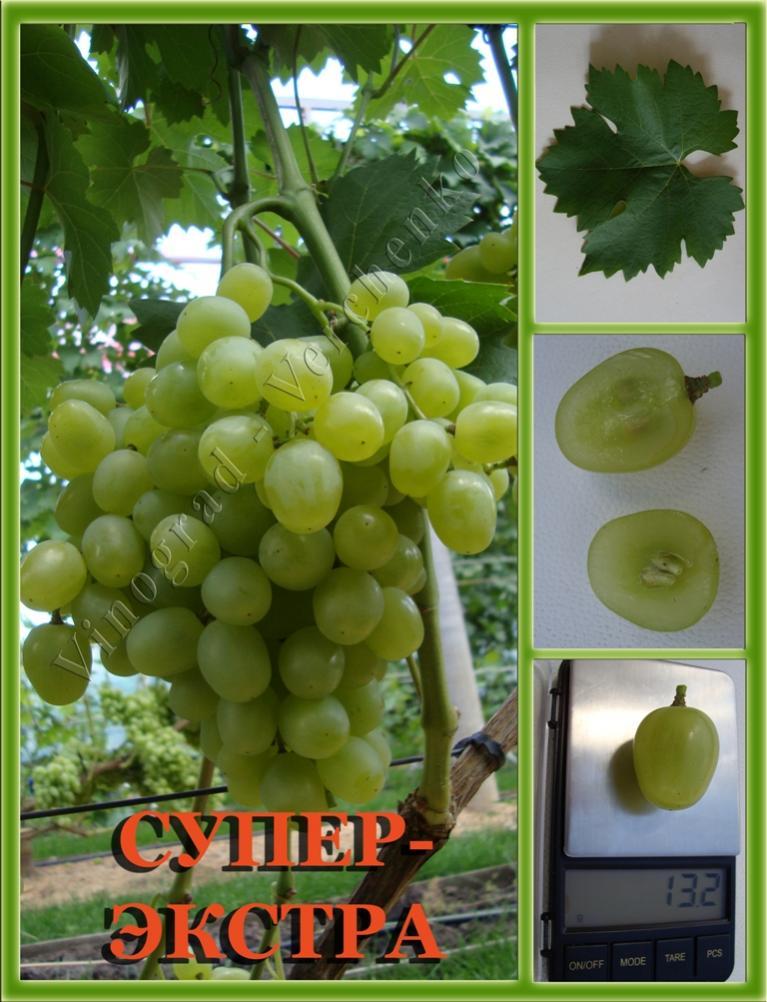 Алешенькин  виноград